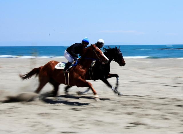 競馬で走る馬